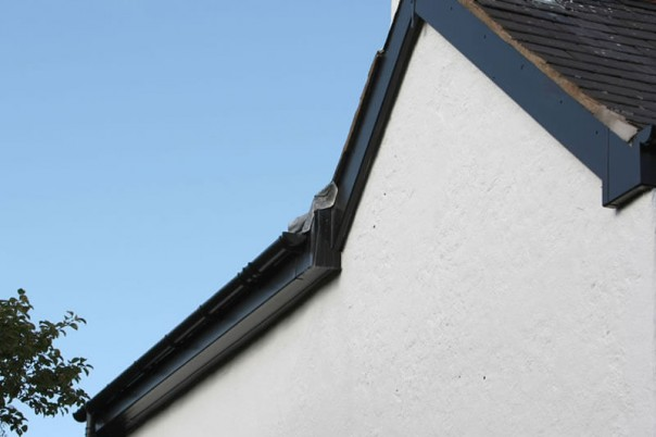 Black fascia boards